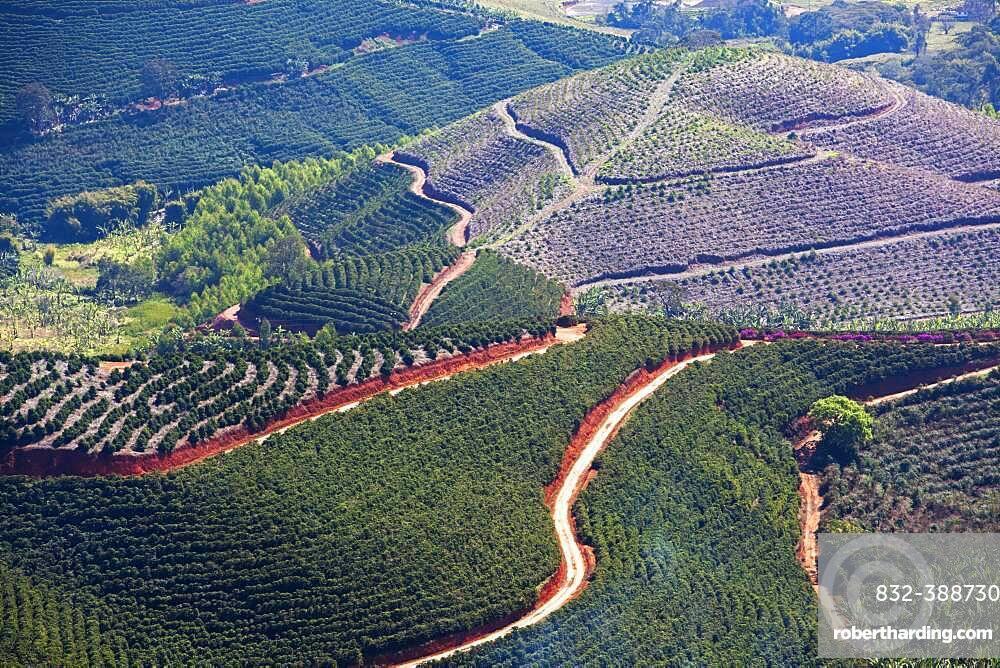 Coffee plantations near Carmo de Minas, Minas Gerais, Brazil, South America