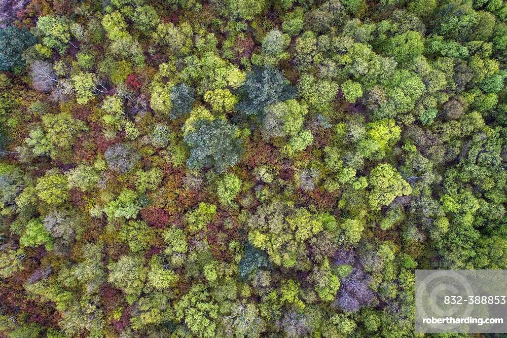 Aerial view, treetops from above, Goldenstedter Moor, Oldenburger Muensterland, Lower Saxony, Germany, Europe