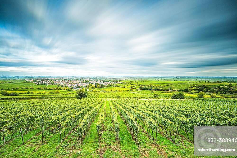 View over vineyards to Deidesheim, Palatinate, Rhineland-Palatinate, Germany, Europe
