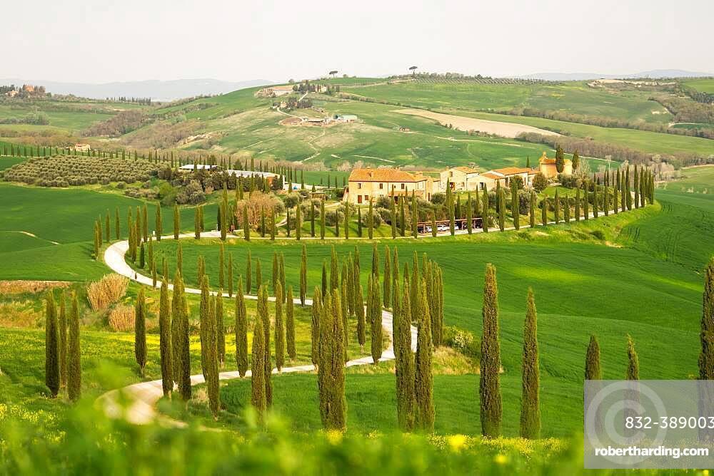 Curvy road with cypresses near Asciano, Tuscany, Italy, Europe