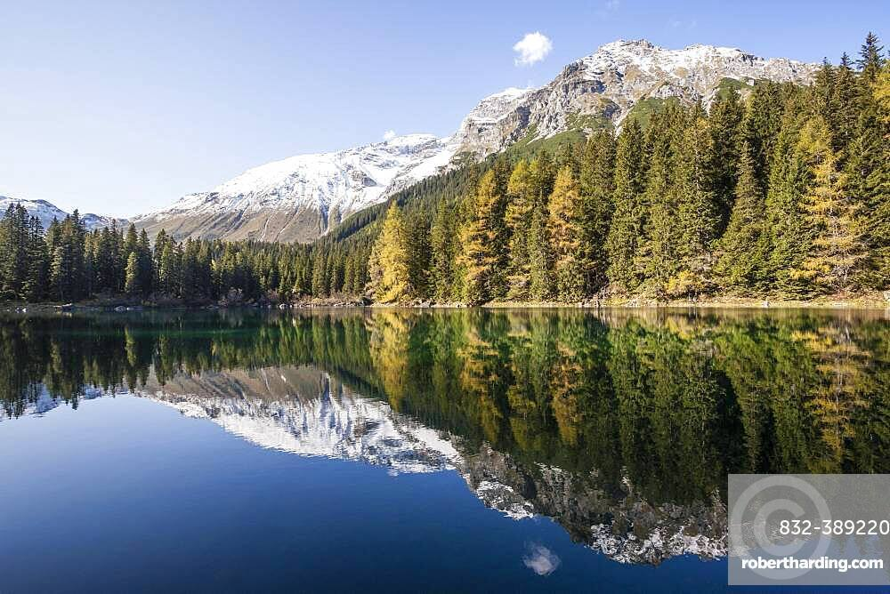 Autumnal larch forest at Obernberger See, Tyrol, Austria, Europe