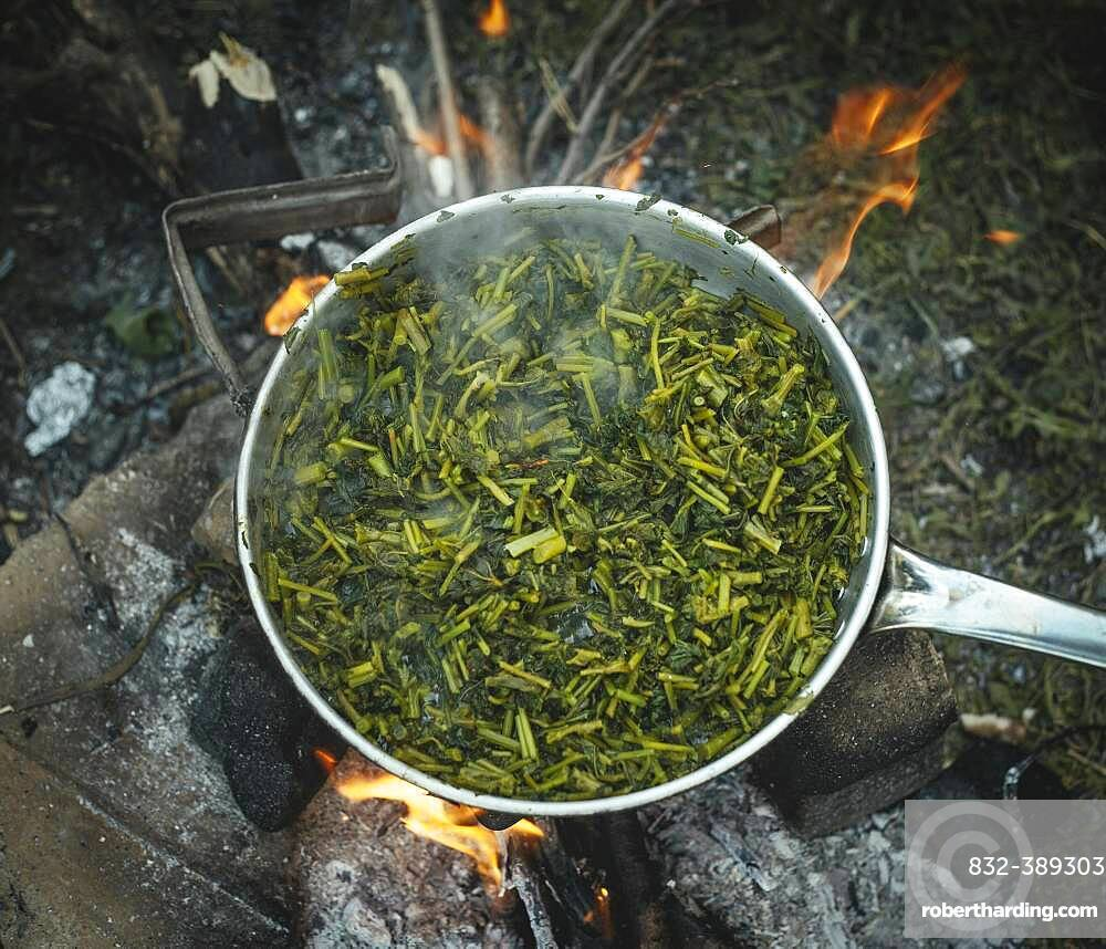 Wild vegetables in a pot around the campfire of a family of refugees in the camp Idomeni, Greece, Europe