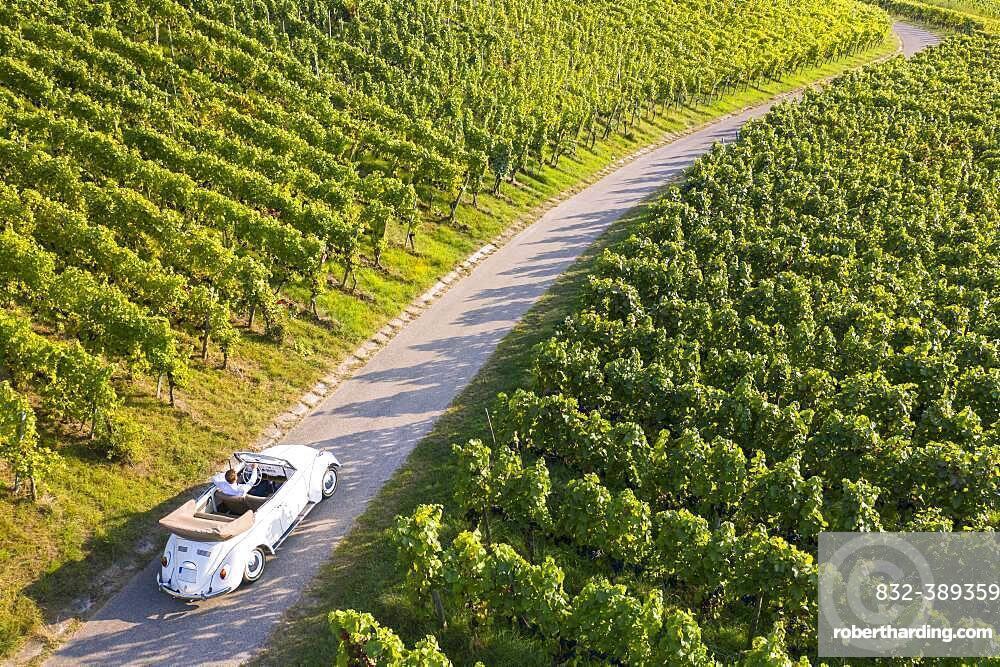 UAV recording, businessman in a vintage car, driving through vineyard, Remstal, Baden-Wuerttemberg, Germany, Europe