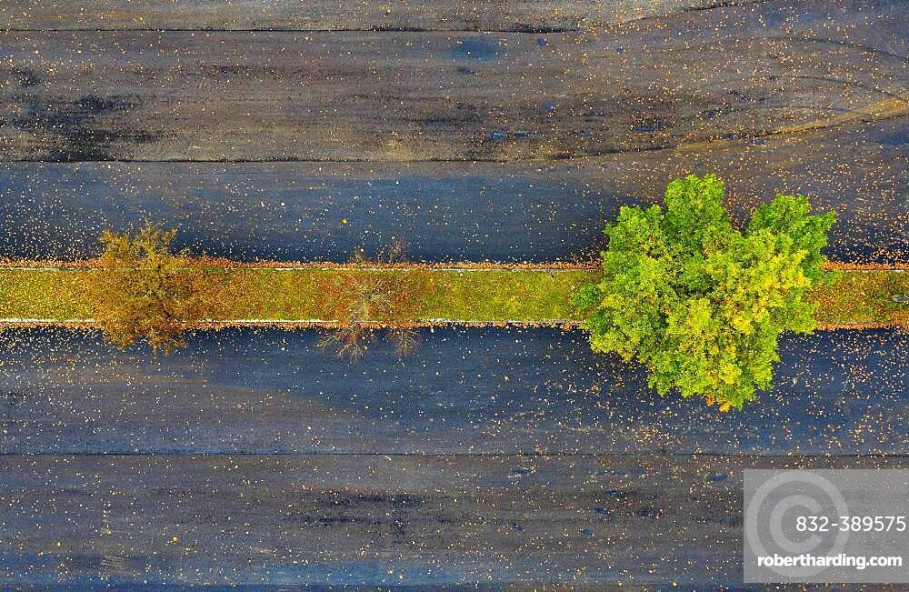 Car parking lot with colourful deciduous trees, from above, drone photo, aerial photo, Mondseeland, Salzkammergut, Upper Austria, Austria, Europe