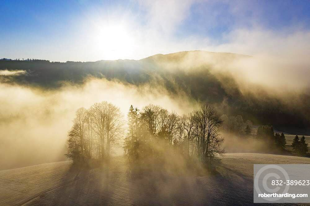 Group of trees rising out of the sea of fog, inversion weather, drone shot, aerial view, Mondseeland, Salzkammergut, Upper Austria, Austria, Europe