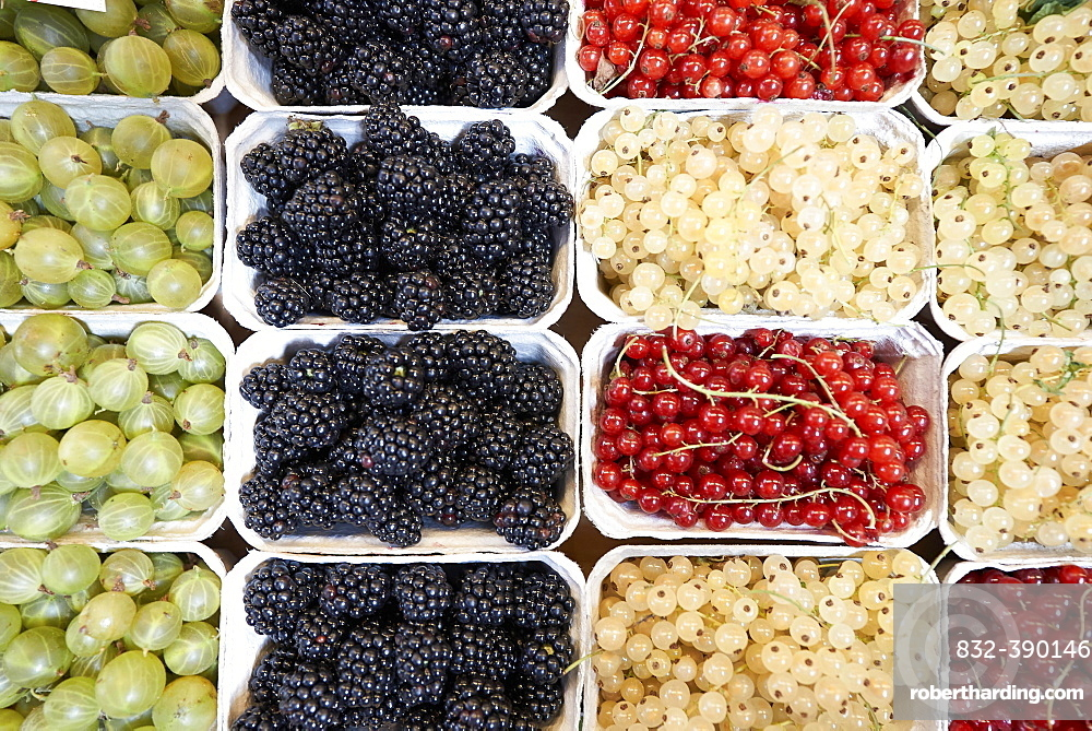 Gooseberry, blackberry, red currant and white currant prepared for sale in the market