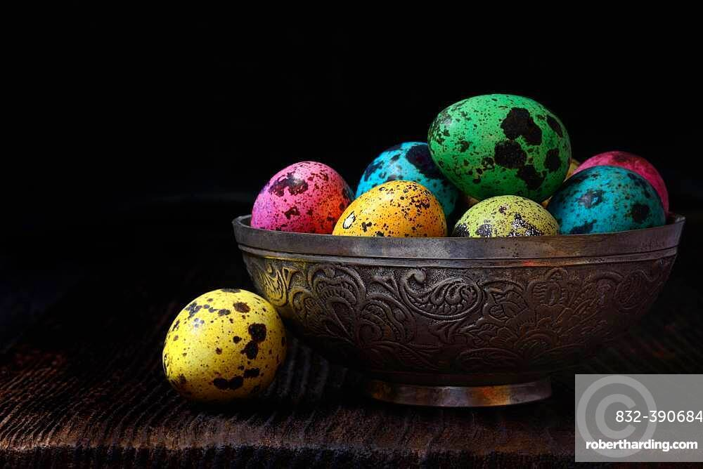 Coloured quail eggs in shell, Easter eggs, Germany, Europe