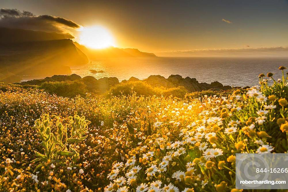 Rocky coast at the Ponta da Sao Lourenco and spring flowers at sunset, Eastern tip of the island, Madeira, Portugal, Atlantic, Europe