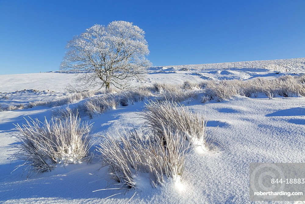 Panoramic view of frozen tree in snow covered landscape near Buxton, High Peak, Derbyshire, England, United Kingdom, Europe