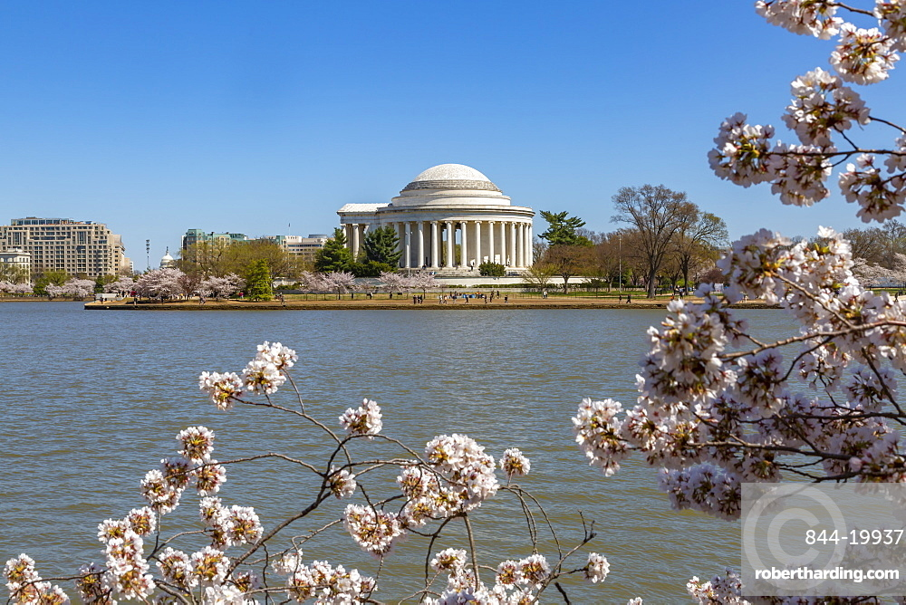 View of the Thomas Jefferson Memorial, Tidal Basin and cheery blossom trees, Washington D.C., United States of America, North America