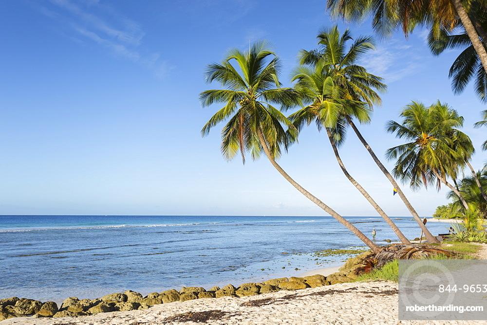 Savannah Beach, Bridgetown, Christ Church, Barbados, West Indies, Caribbean, Central America