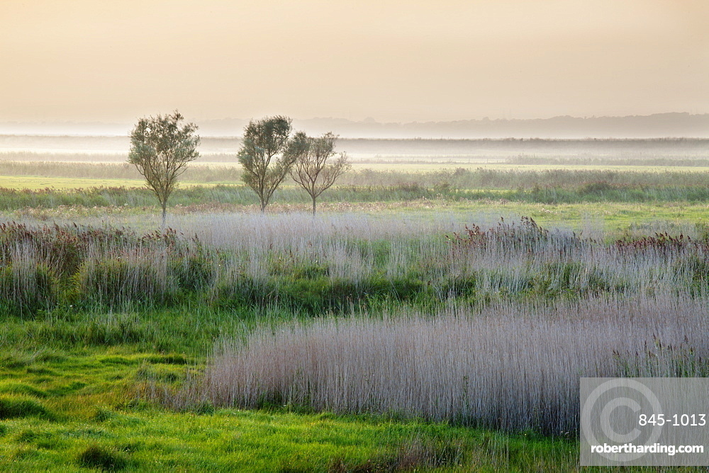 Aldeburgh Marshes at sunset, Suffolk, England, United Kingdom, Europe