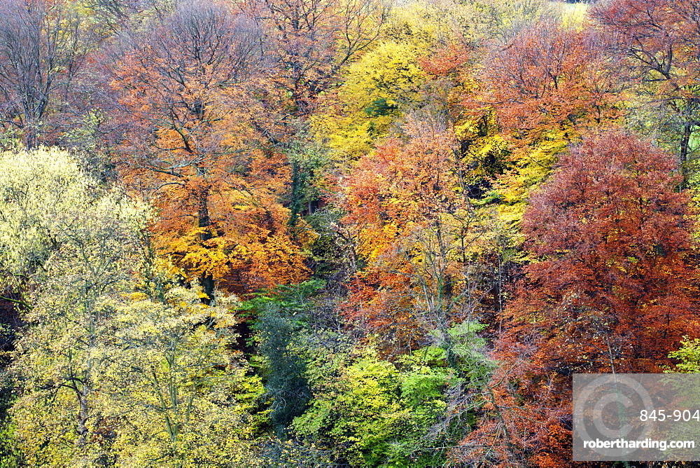 Autumn Trees on Long Walk at Mother Shiptons in Knaresborough North Yorkshire England