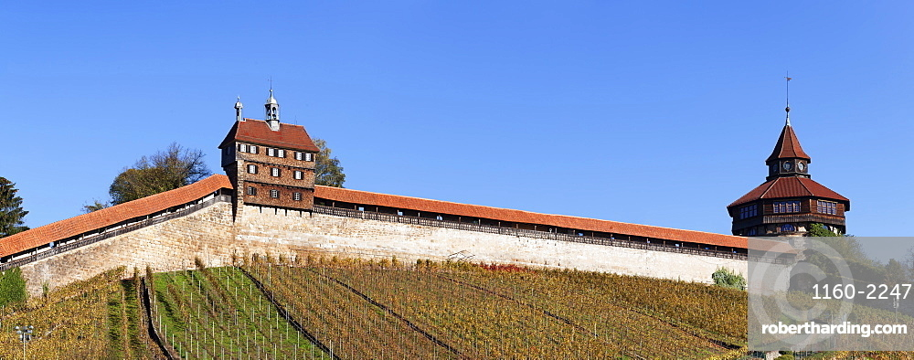 Dicker Turm Tower and Castle with vineyards in autumn, Esslingen, Baden Wurttemberg, Germany, Europe