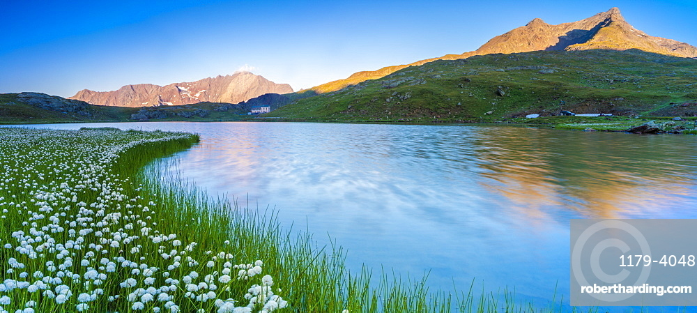 Panoramic of Monte Gavia mirrored in Lago Bianco surrounded by cotton grass, Gavia Pass, Valfurva, Valtellina, Lombardy, Italy