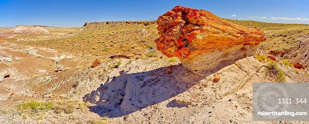 A giant petrified log on a sandstone pedestal on the edge of the Blue Mesa in Petrified Forest National Park, Arizona, United States of America, North America