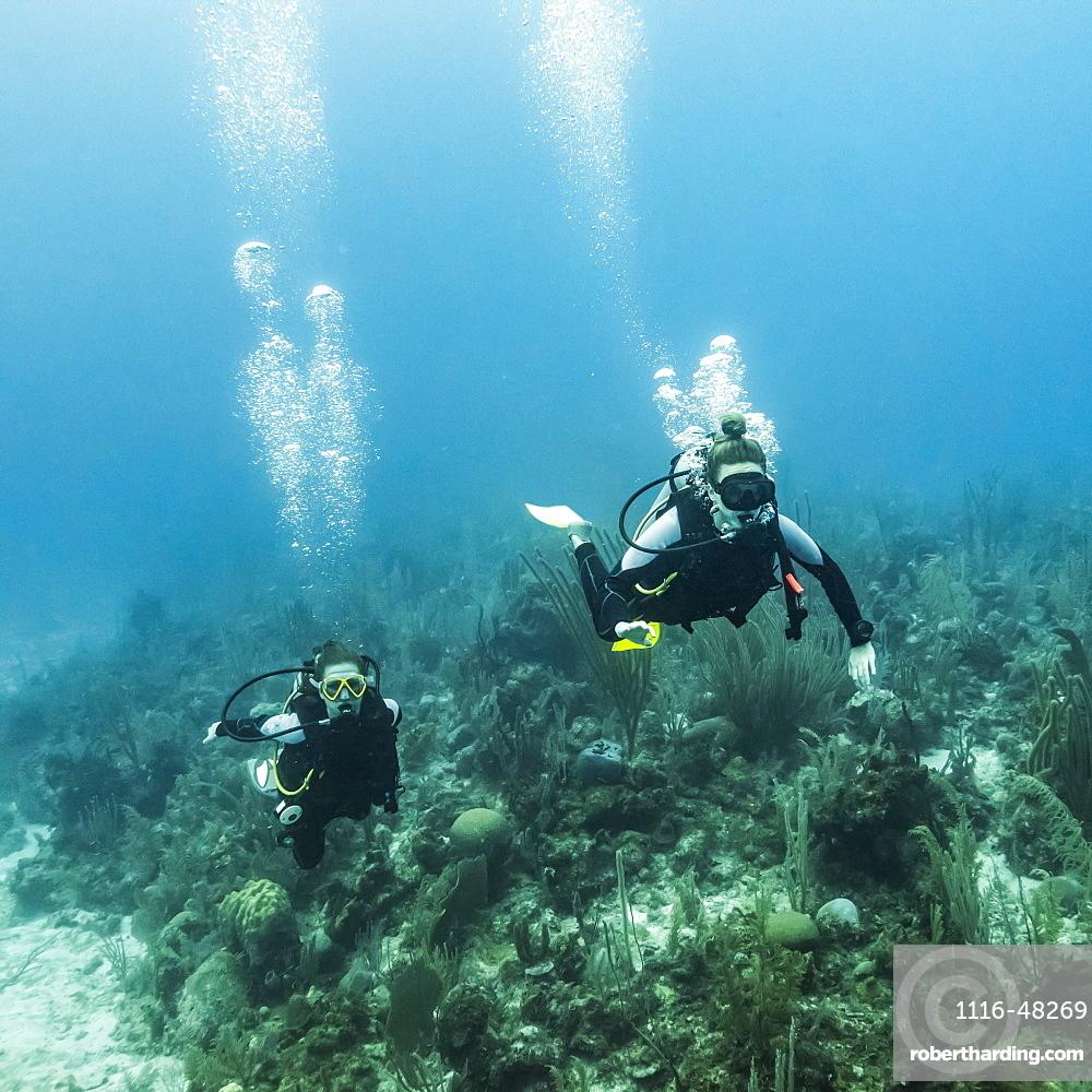 Scuba divers at Joe's Wall Dive Site, Belize Barrier Reef, Belize
