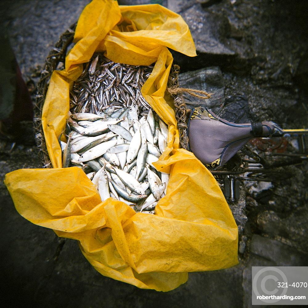 Yellow plastic bag full of fresh fish on back of bicycle, Stone Town, Zanzibar, Tanzania, East Africa, Africa