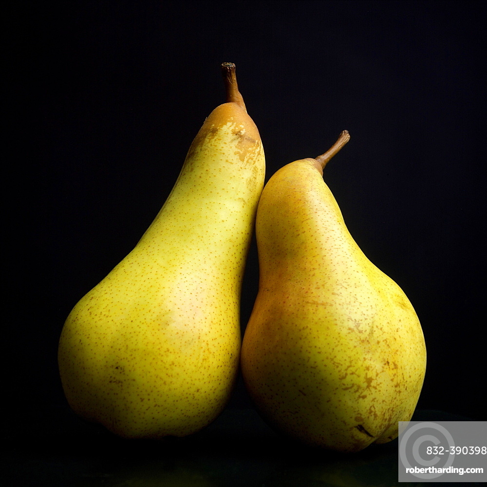 Two yellow pears on a black background
