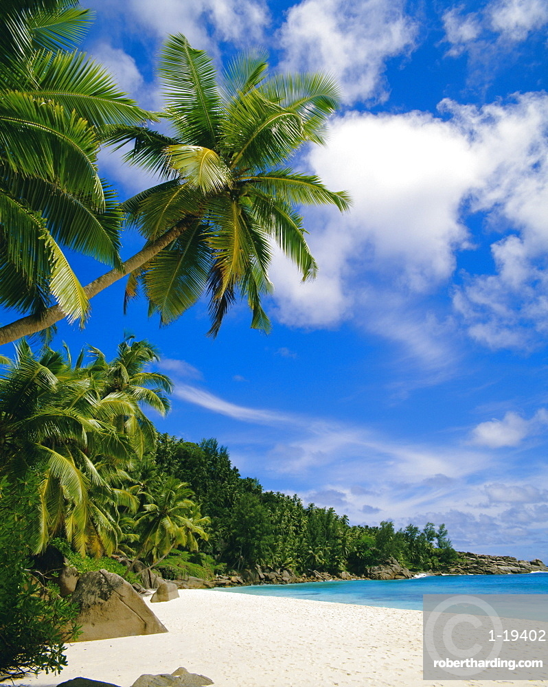 Palm trees and beach, Seychelles