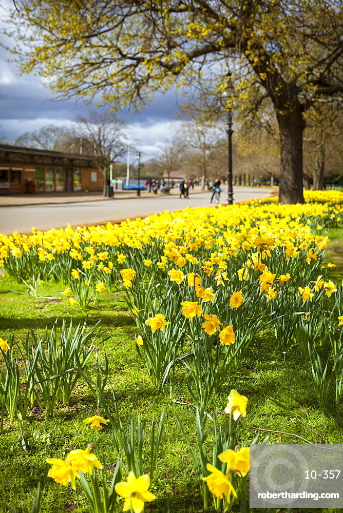 Visitors walking along the Serpentine with daffodils in the foreground, Hyde Park, London, England, United Kingdom, Europe