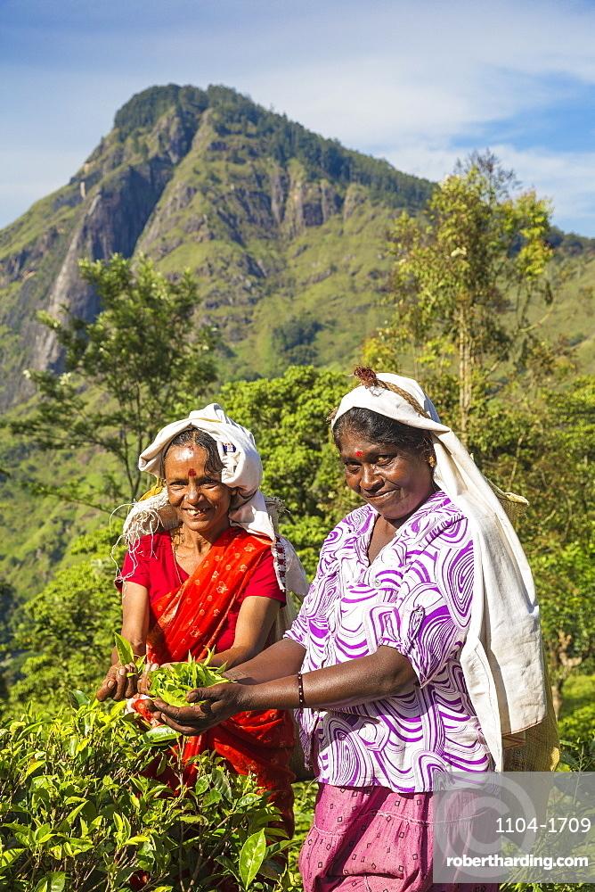 Sri Lanka, Ella, Tea pluckers