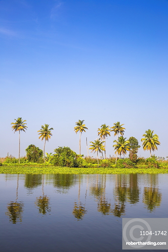 Backwaters, Alappuzha (Alleppey), Kerala, India, Asia