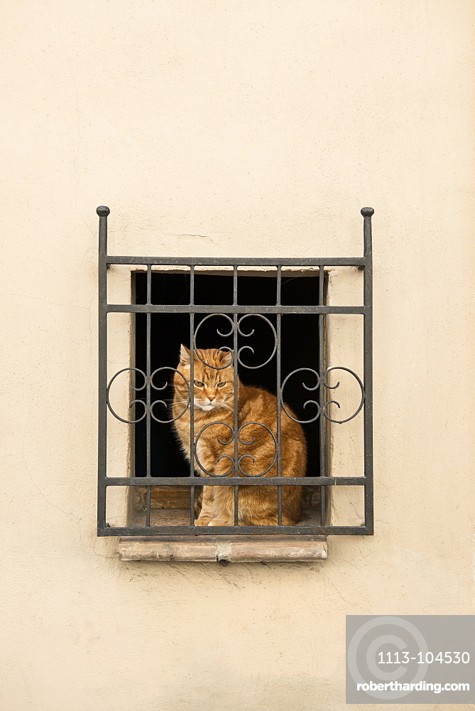 Cat sat at a window in Pienza, Val d`Orcia, province of Siena, Tuscany, Italy, UNESCO World Heritage
