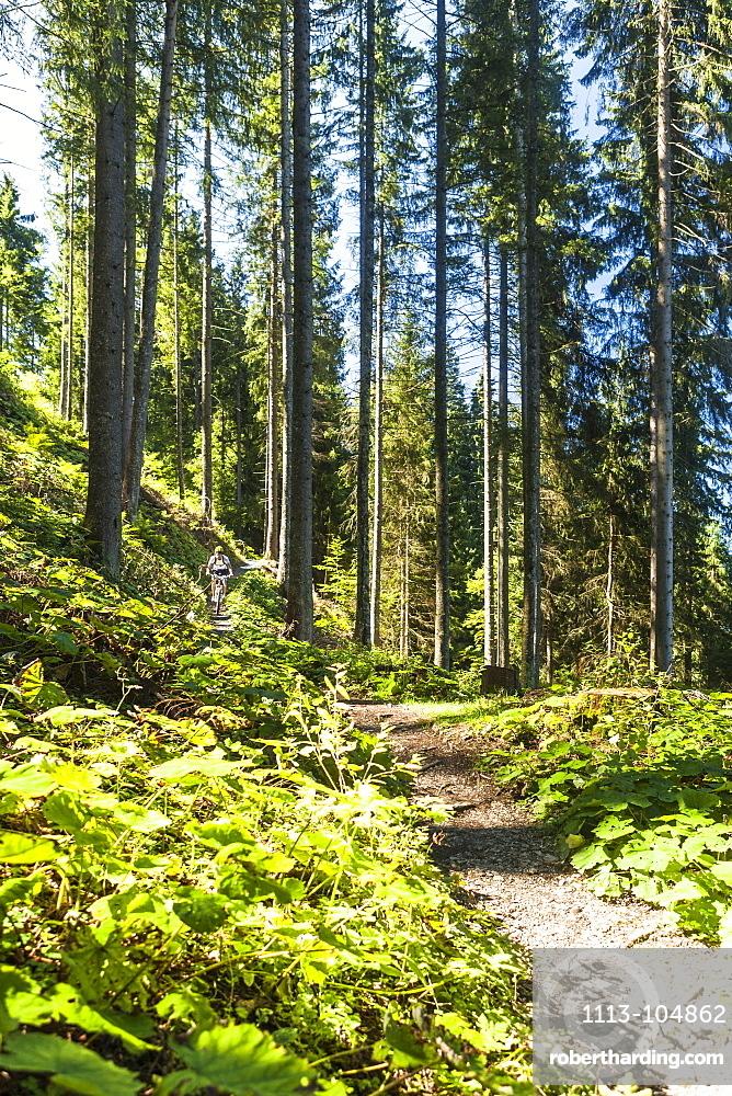 Mountainbiker in the woods, Garmisch-Partenkirchen, Bavaria, Germany