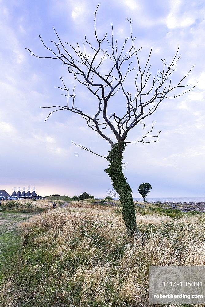 Smokehouse for fish and dead tree against a dramatic sky, Baltic sea, Bornholm, Svaneke, Denmark, Europe