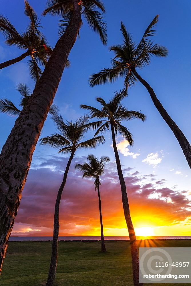 The sun sets behind silhouetted palm trees, Kihei, Maui, Hawaii, United States of America