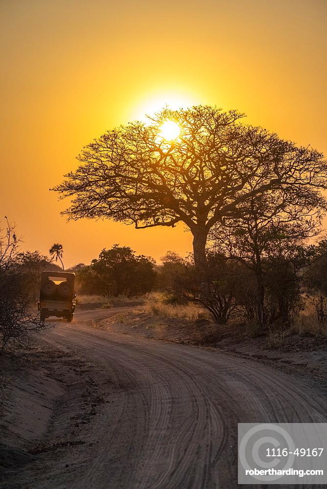 Safari vehicle drives toward the rising sun shining through the branches of a leafless tree in Katavi National Park, Tanzania