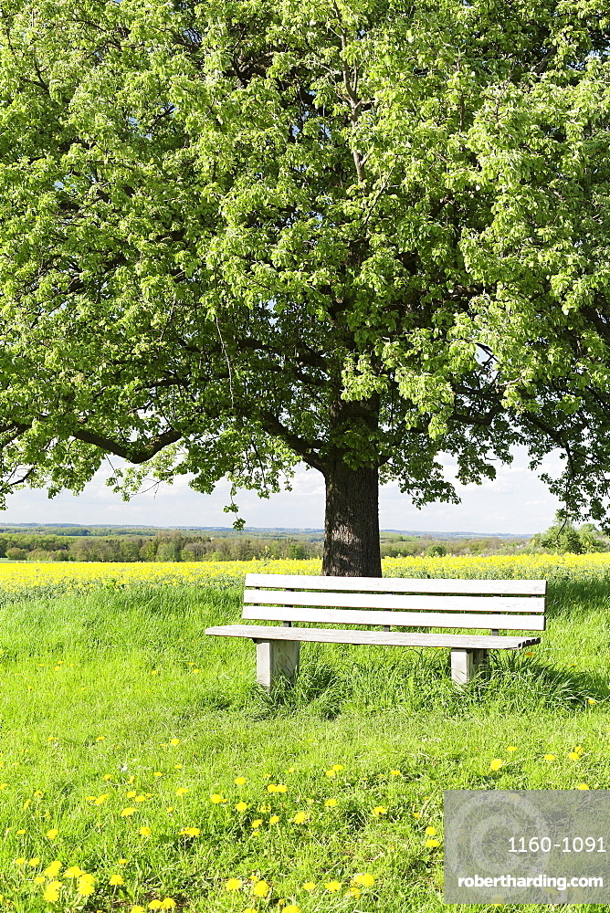 Bench beneath a tree, Frahlingswiese, Baden Wurttemberg, Germany, Europe