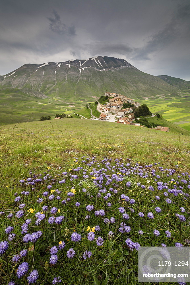 Colorful flowers in bloom frame the medieval village, Castelluccio di Norcia, Province of Perugia, Umbria, Italy, Europe