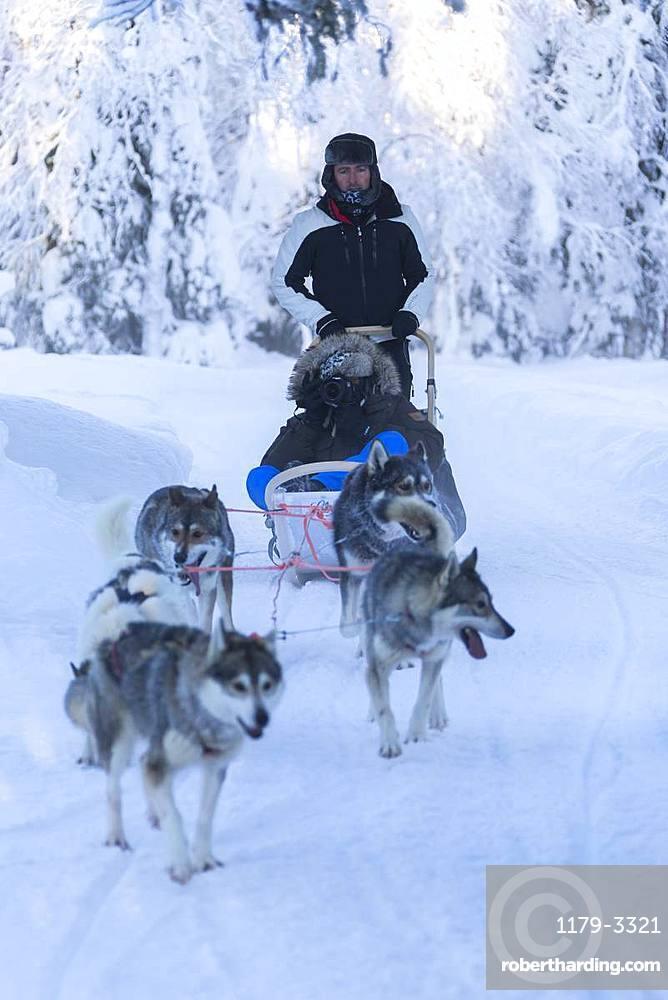 Dog sledding, Kuusamo, Northern Ostrobothnia region, Lapland, Finland, Europe
