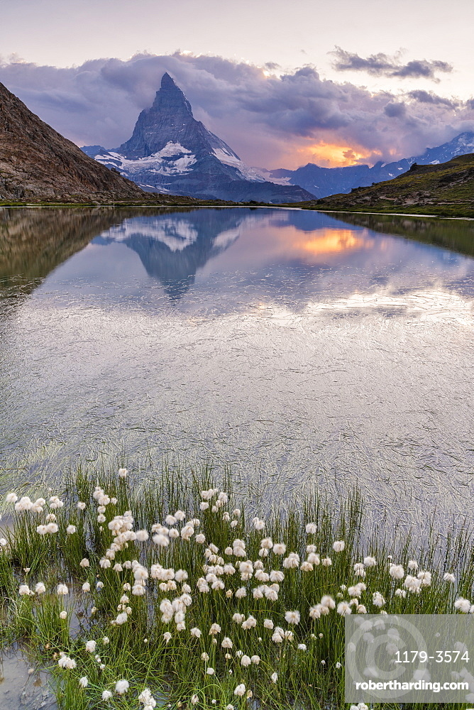 Cotton grass on the shore of lake Riffelsee with the Matterhorn in the background, Zermatt, canton of Valais, Swiss Alps, Switzerland, Europe