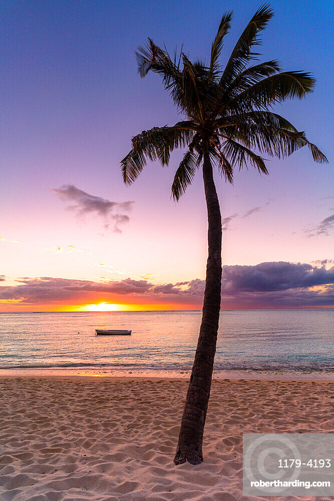 Palm tree on tropical beach during sunset, Le Morne Brabant, Black River district, Mauritius, Indian Ocean, Africa