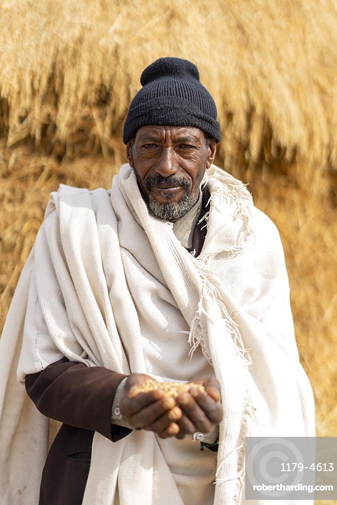 Portrait of senior man holding wheat in hands, Wollo Province, Amhara Region, Ethiopia, Africa