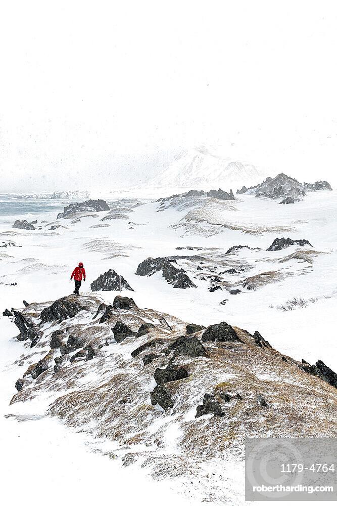 Hiker man walking on rocks during the Arctic snowstorm, Sandfjorden, Berlevag, Varanger Peninsula, Troms og Finnmark, Norway, Scandinavia, Europe