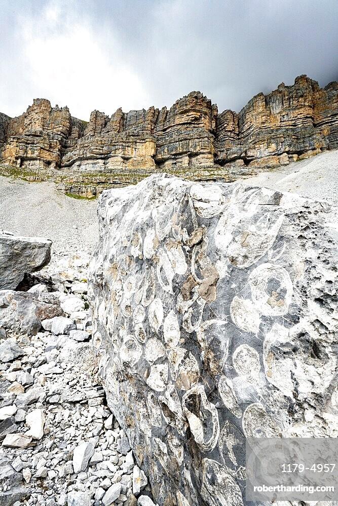 Marine fossils on rocks at the geological area Orti della Regina, Brenta Dolomites, Madonna di Campiglio, Trentino, Italy