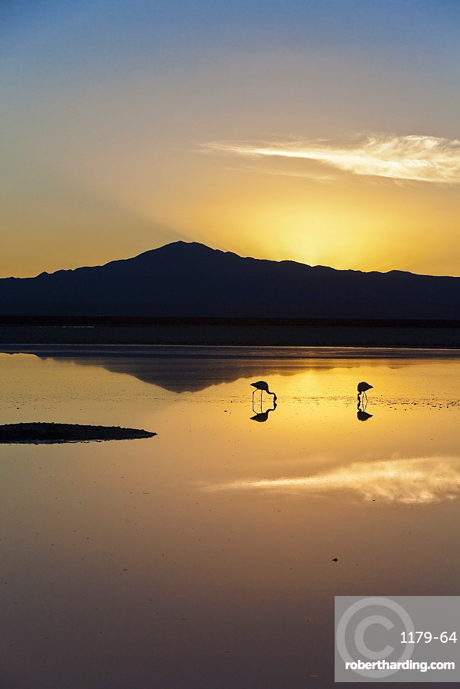 The stunning contrast of the thin fragile legs of two solitary flamingos fishing in a lagoon, Chile, South America