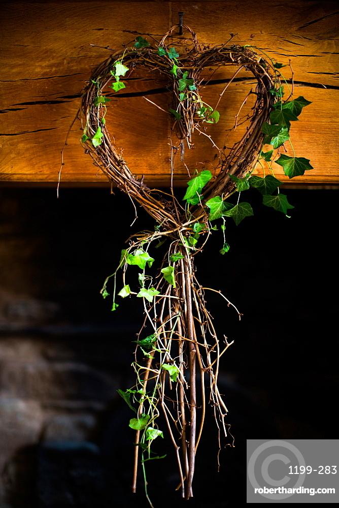 Ivy in heart shape, United Kingdom, Europe
