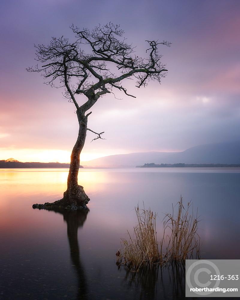 Loch Lomond at sunset, Scotland, United Kingdom, Europe