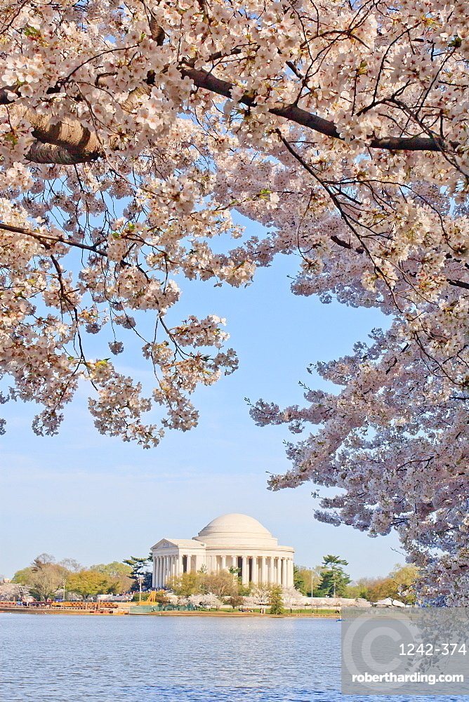 Cherry blossoms, Washington, DC, United States