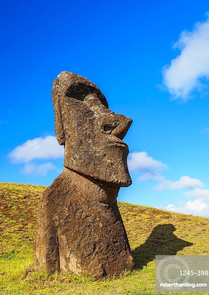 Moai at the quarry on the slope of the Rano Raraku Volcano, Rapa Nui National Park, UNESCO World Heritage Site, Easter Island, Chile, South America