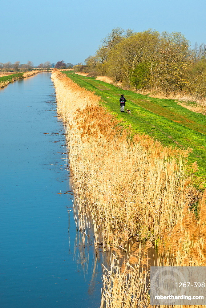 Burwell Lode at Wicken Fen, Cambridgeshire, East Anglia, England, United Kingdom, Europe