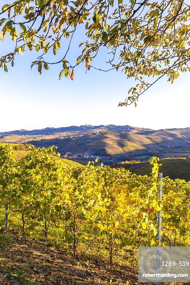 Vineyard of Barolo wine region during autumn. Serralunga d'Alba, Langhe, Piedmont, Italy, Europe.