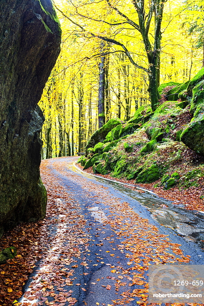 Road in the forest of Bagni di Masino in autumn, Valmasino, Valtellina, Lombardy, Italy, Europe