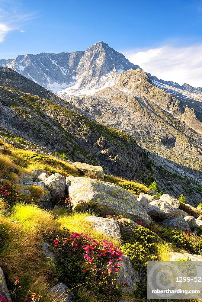 Mount Adamello in the summer season, Parco Adamello, Vallecamonica (Val Camonica), Brescia Province, Lombardy, Italy, Europe