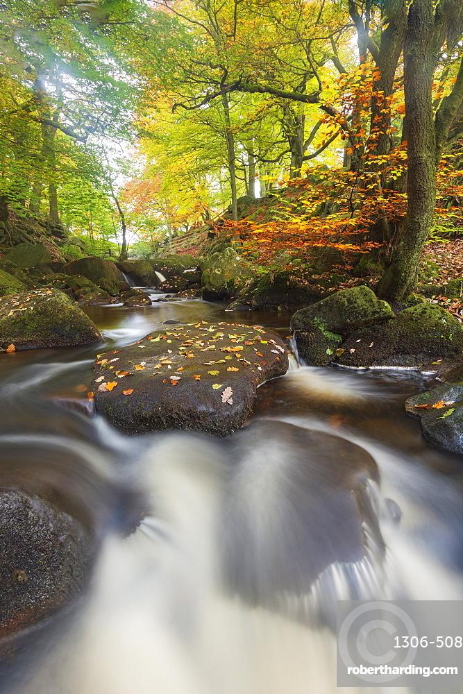 Autumn colours at Padley Gorge, Peak District National Park, Derbyshire
